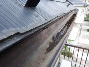 雨樋のツマリ対策(台風リフォーム)