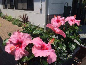 夏の花にリフォーム