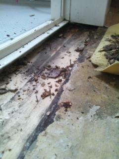 腐食した床の木片を取り除く