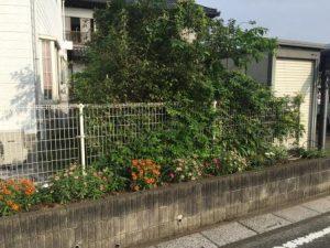 既存の植木のスペース2
